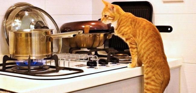 Рыжий кот смотрящий на приготовление пищи