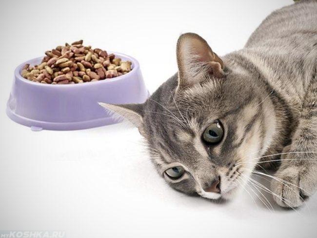 Серая кошка лежит на полу рядом с миской сухого корма