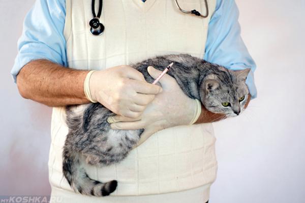 Педиатр держит кота на руках