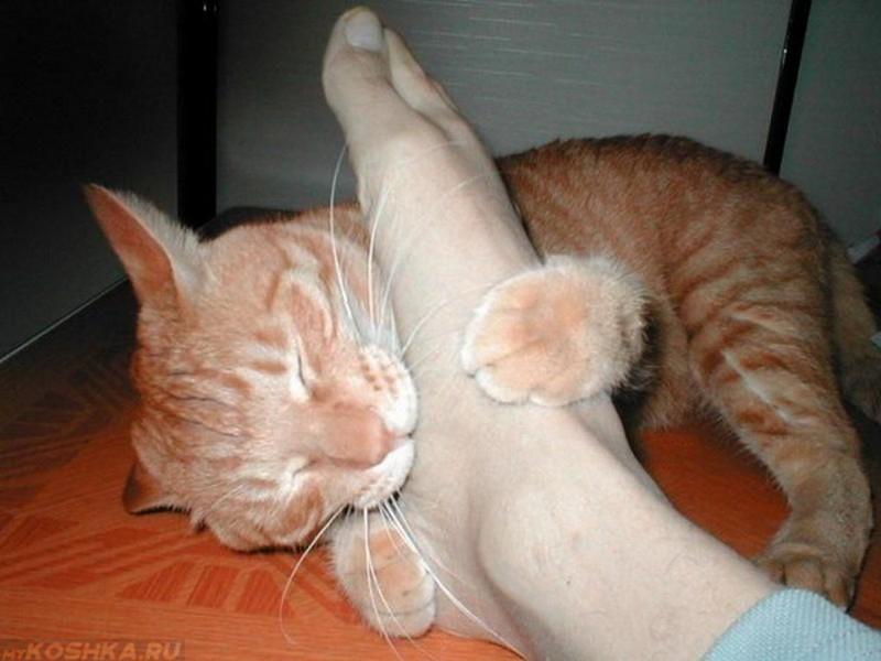 Кот бросается в ноги кусает