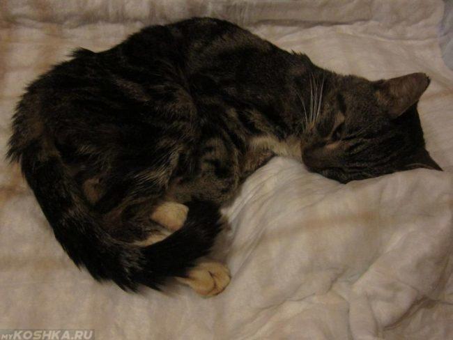 Депрессия у серого полосатого кота
