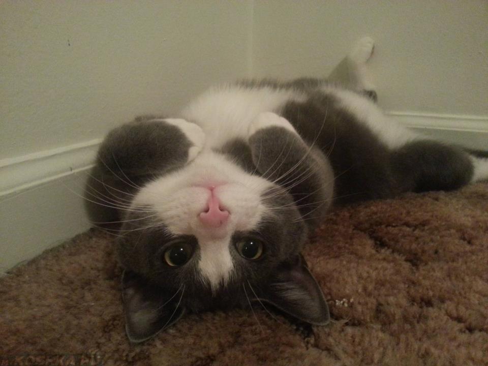 Кот валяется на спине к чему