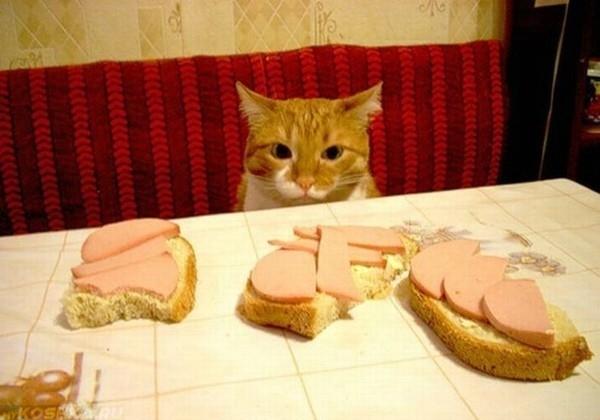Рыжий кот смотрит на бутерброды