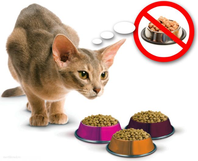 Серая короткошерстная кошка и три разноцветные миски с едой без оды