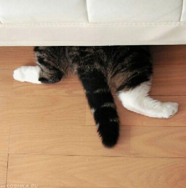Серый кот с белыми лапами под белой кроватью