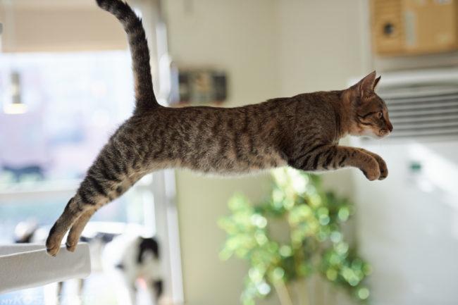 Разноцветный кот в прыжке