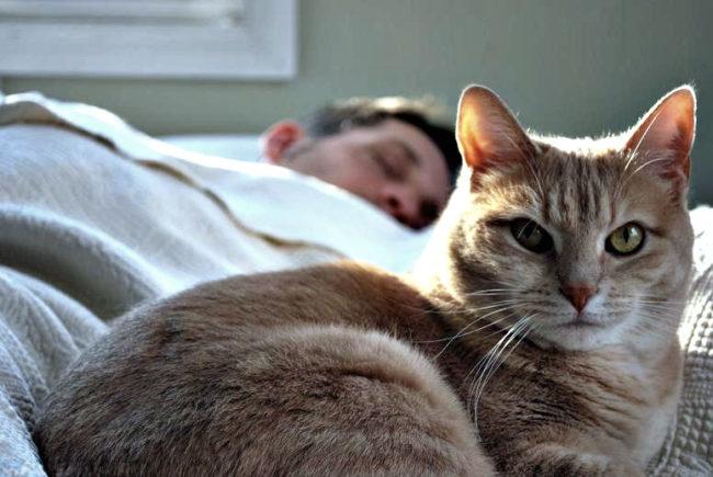 Рыжий кот после сна рядом с хозяином на кровати