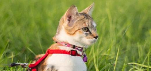 Кот одетый в поводок шлейку гуляет в траве