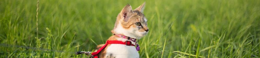 Как сшить шлейку для кошки