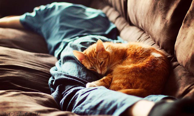 Рыжий кот спит в ногах хозяина