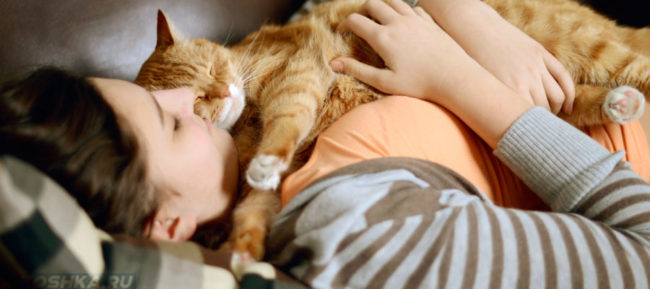 Рыжий кот спит на хозяйке