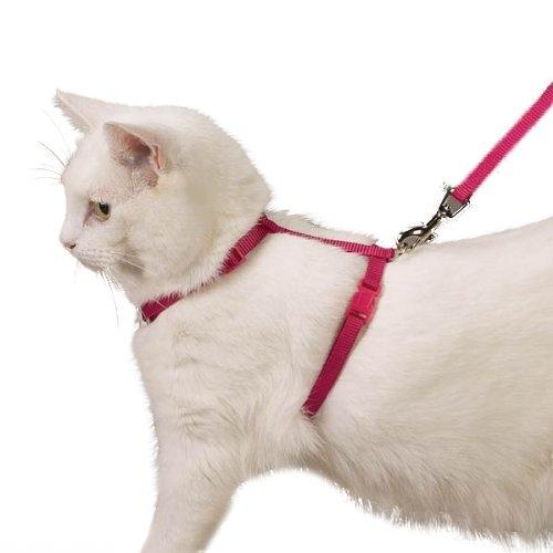 Белый кот в красной шлейке
