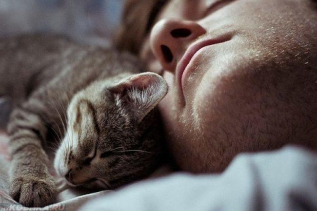 Серый полосатый котёнок на груди спящего хозяина