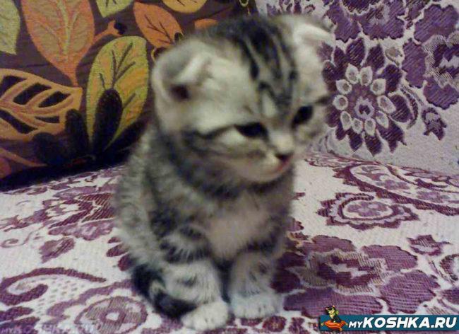 Котёнок скучает и плачет на диване