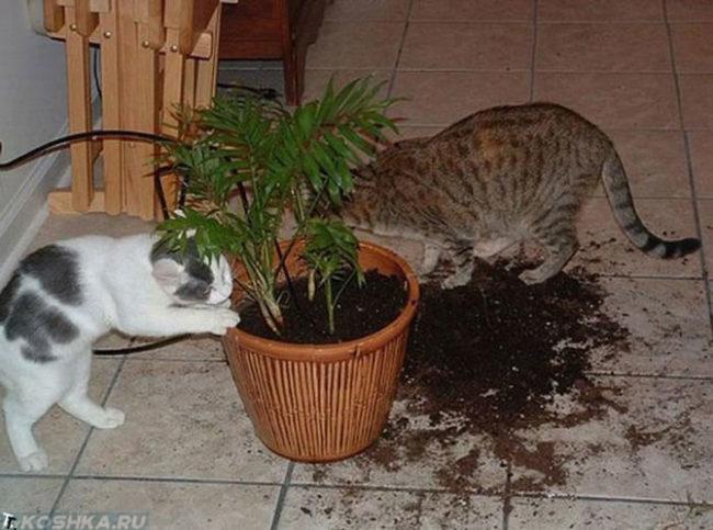 Две кошки и рассыпавшаяся земля из горшка