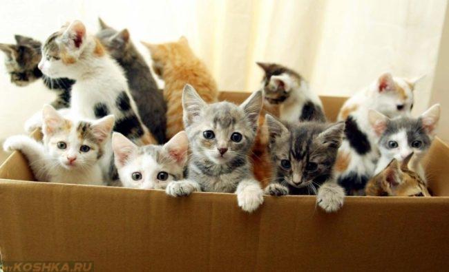 Много котят в картонной коробке