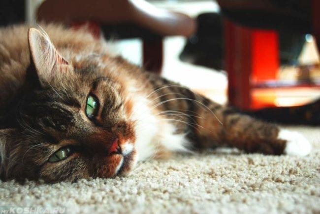 Кошка спит на полу на ковре