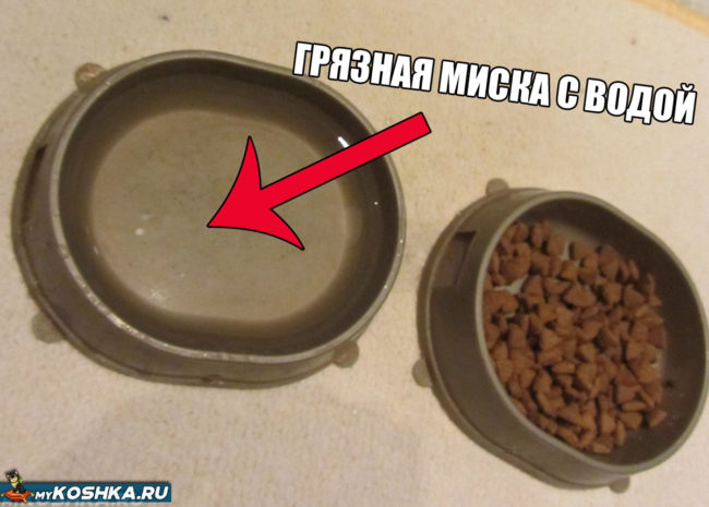 Грязная миска с едой и водой у кошки