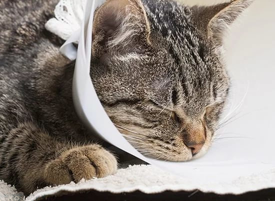 Кошка спит в воротнике