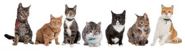Много пород кошек на одном фото