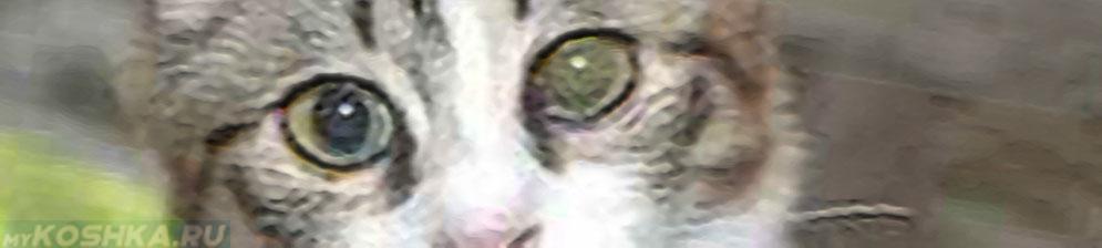 Помутнел левый глаз у кошки
