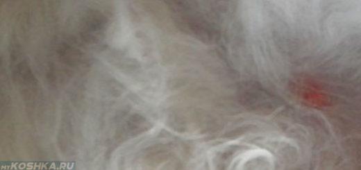 Набухли молочные железы у кошки вблизи