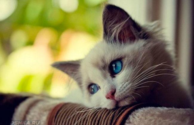 Грустный кот смотрит в сторону
