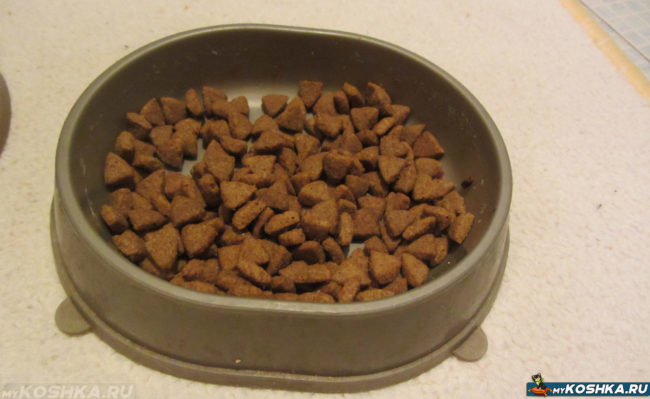 Нетронутая миска с едой у кошки