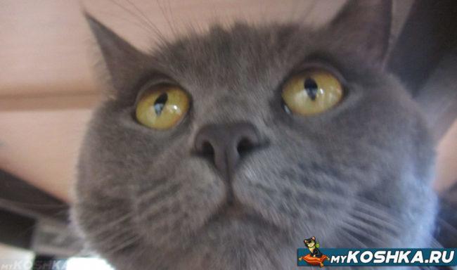Нормальные зрачки у кошки