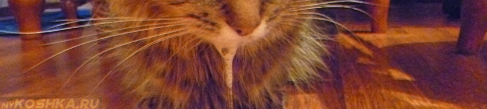 Пена изо рта у кошки при бешенстве