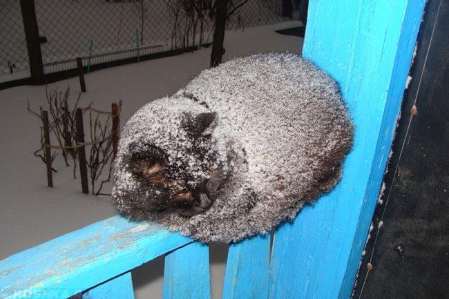 Замерзший кот в снегу на голубой рейке