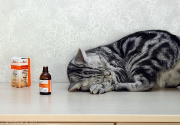 Кот спит рядом с бутылкой валерьянки