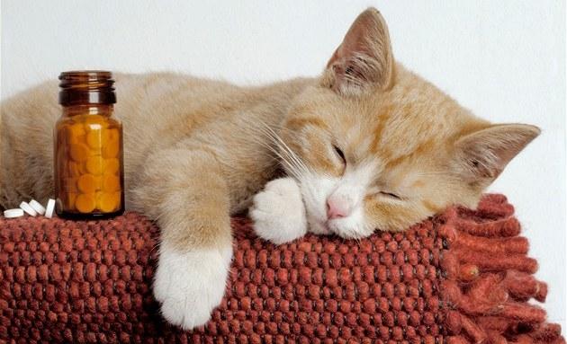 Рыжий кот спит рядом с таблетками