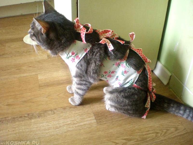Сколько времени кот отходит после наркоза