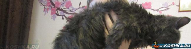 Кошка после купания шерсть дыбом