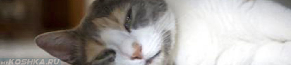 У этой кошки рак желудка