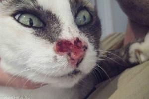 Рак у кошки после курса лучевой терапии
