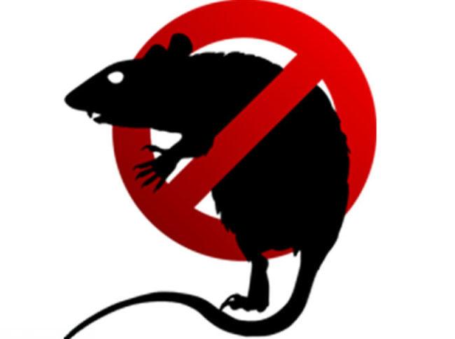 Картинка крысиного яда