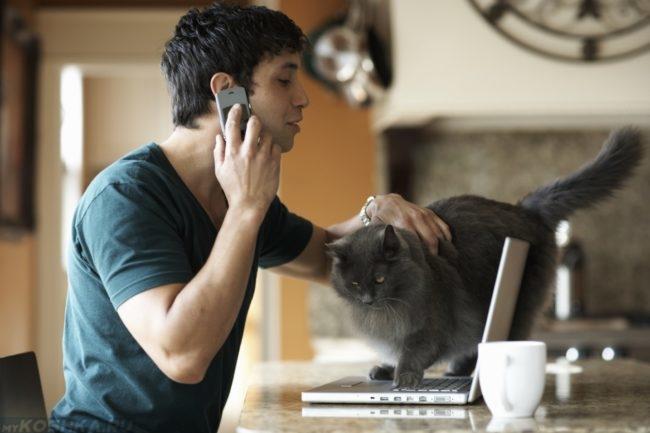 Разговор с ветеринаром по телефону о лечении серого пушистого кота