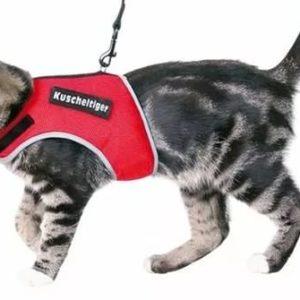 Кот в красном шлейке