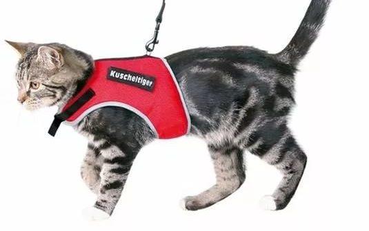 Шлейка для кошки своими руками фото
