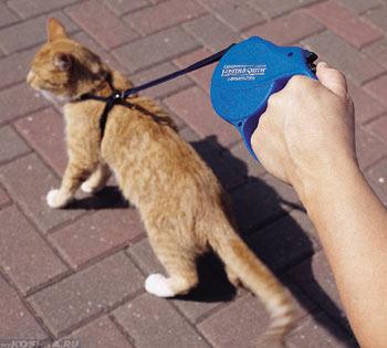 Рыжий кот гуляет в шлейке по улице