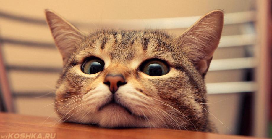 Если кот начал орать