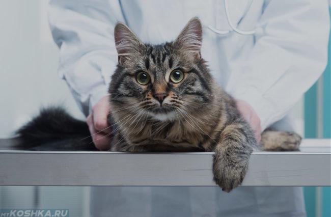 Кот лежит на столе у ветеринара