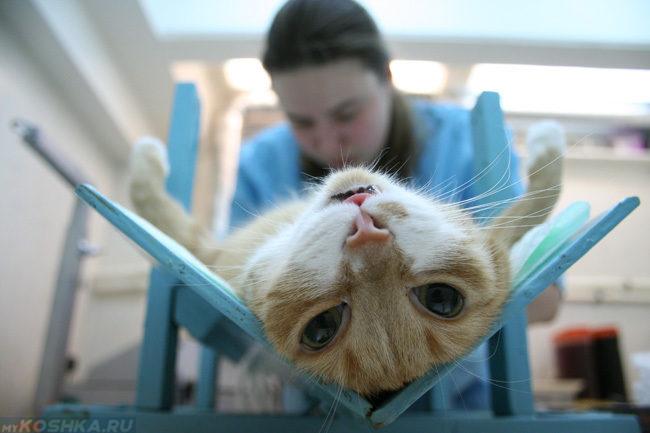 Рыжий кот лежит на операционном столе у ветеринара