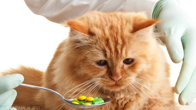 Рыжая кошка принимает таблетки с ложки