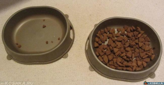 Сухая еда в кошачьей миске