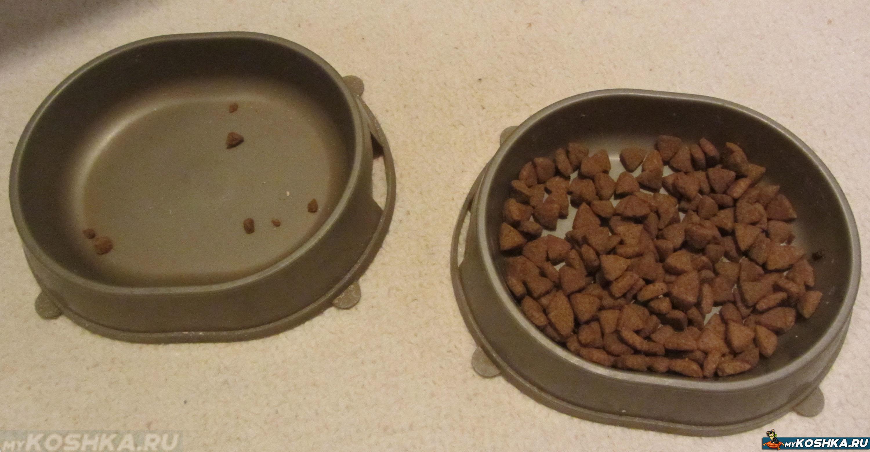 Как и чем кормить кошку или кота: 4 73