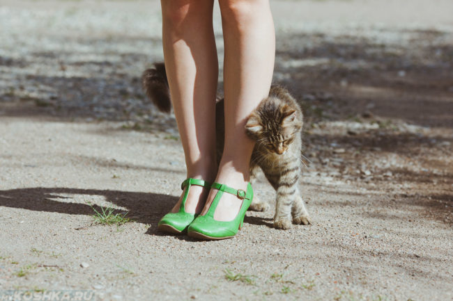 Кошка трется об ноги хозяйки