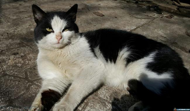 Домашний кот гуляет на улице